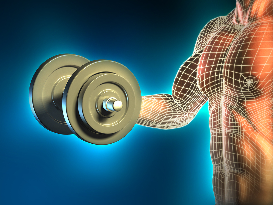 About fitness - how muscles grow