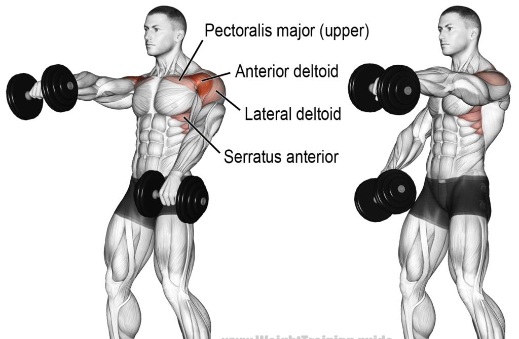 front raises shoulder exercise
