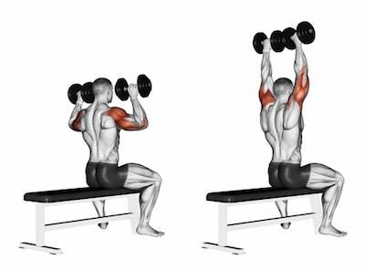 overhead dumbbell press shoulders